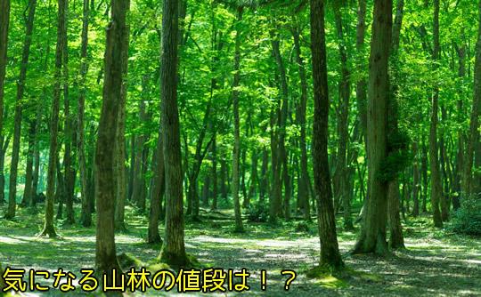 山を売る時の山林の値段はいくらか?
